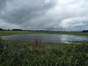 Flooding in the ten-acre paddock east of Mahoney's Road