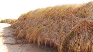 The passage of irregular tidal sweep tracked along Killarney's coast.