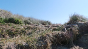 Wave's passage over dune summit at Killarney. picture by Jenny Fawcett 28 Aug 2014