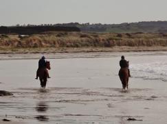 racehorses-at-the-basin-along-killarney-beach-picture-by-j-fawcett-28-oct-2016