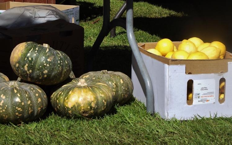 Pumpkins and Lemons @ Fresh Market Warrnambool (c) Jinny Fawcett Sep.2017