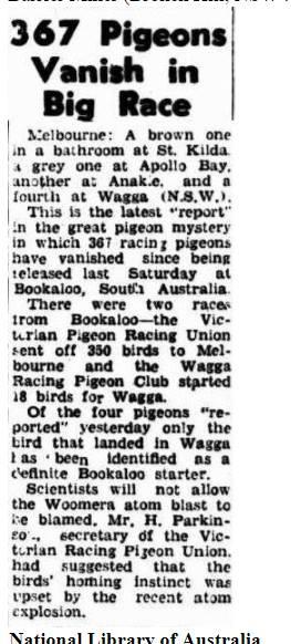367 Missing Pigeons